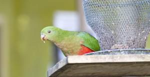 birds-at-del-rio